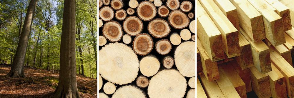 Le bois dans la rénovation